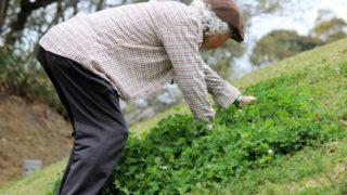 アロマの香りが認知症(アルツハイマー)の予防・改善に効果的!